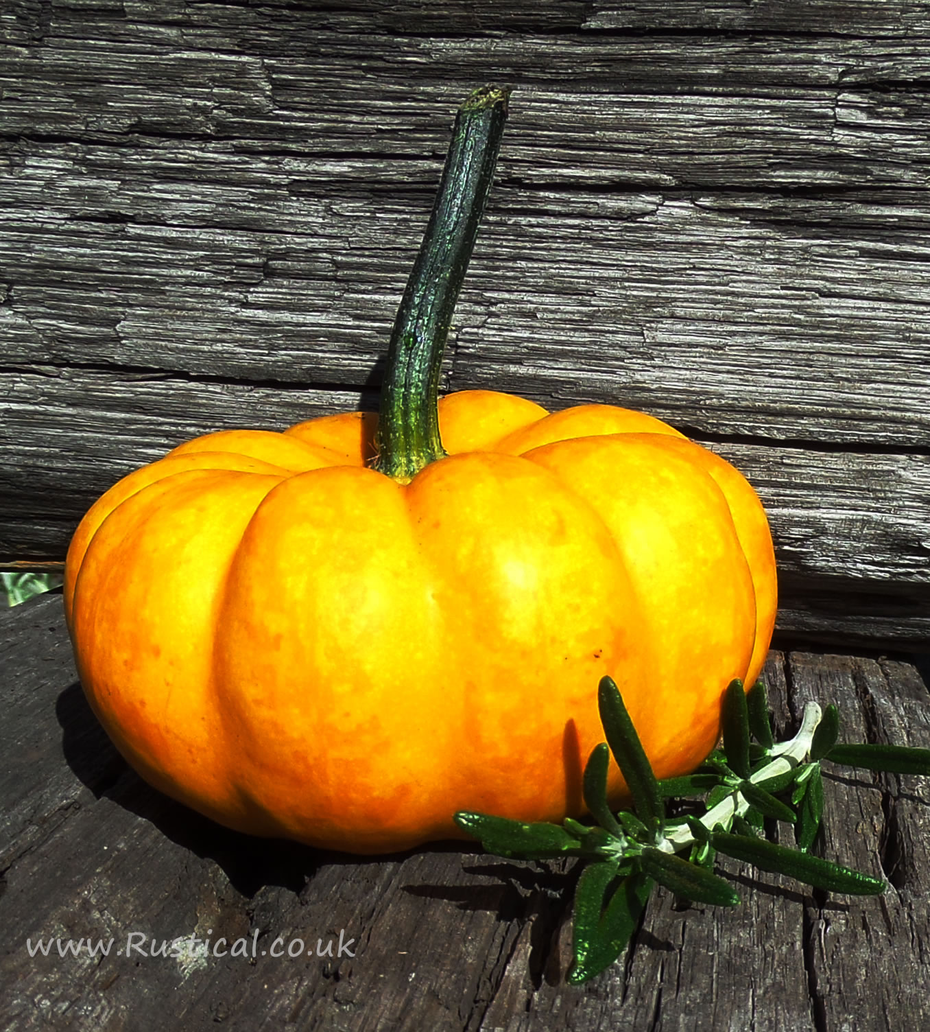 A tiny pumpkin ideal for floristry