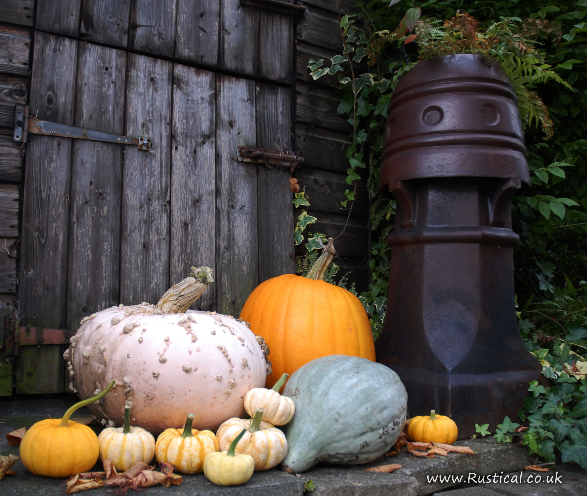 A selection of pumpkins outside our wood shed