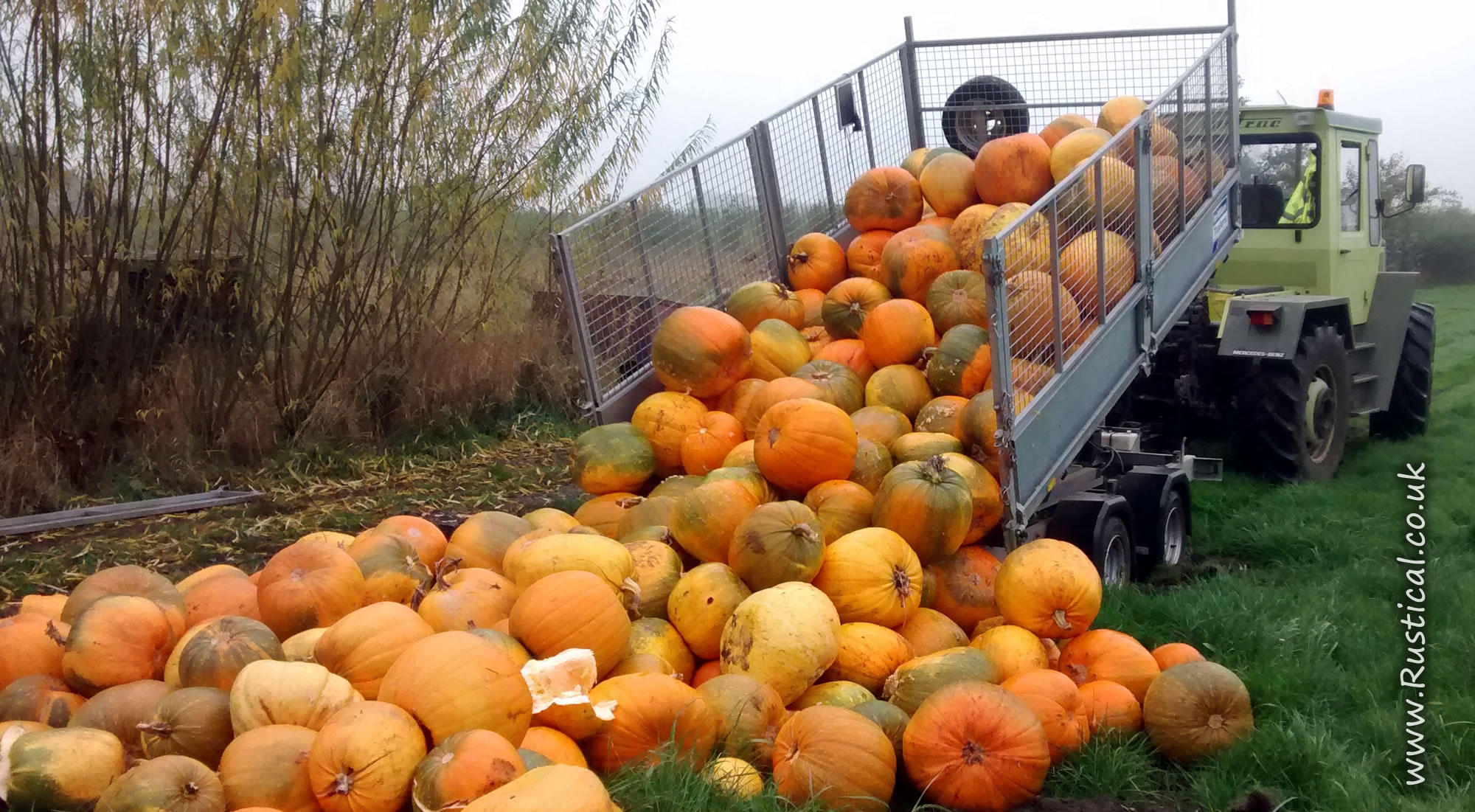 Tipping unsold pumpkins