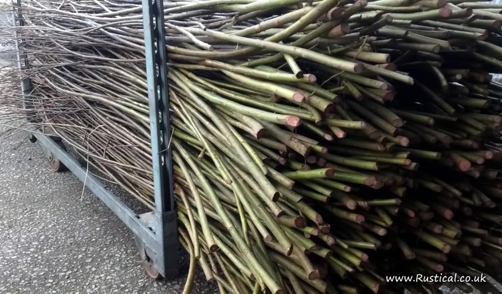 Harvesting basket making willow