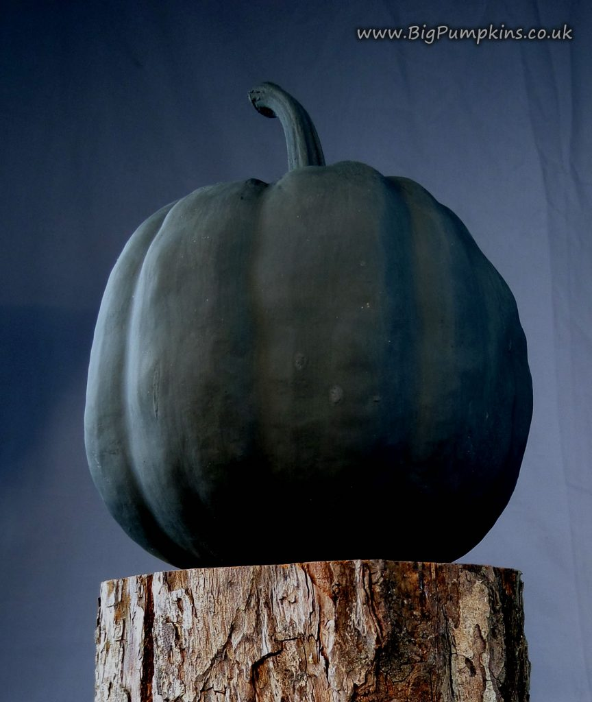 A baby pumpkin with one coat of Chalk Paint