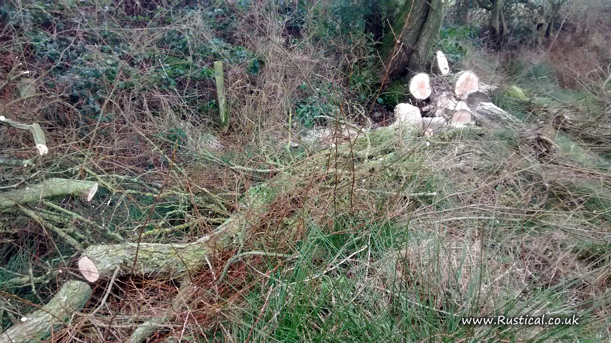 Pond 1 - Removing overhanging branches