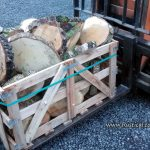 Large log rings for table displays