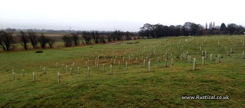 Winter 2017/18 Tree planting at Becconsall Lane, Hesketh Bank