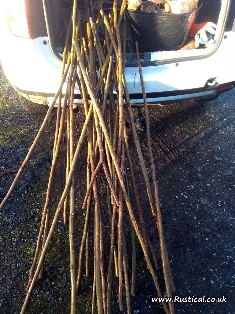 Hazel walking stick shanks harvested January 2018