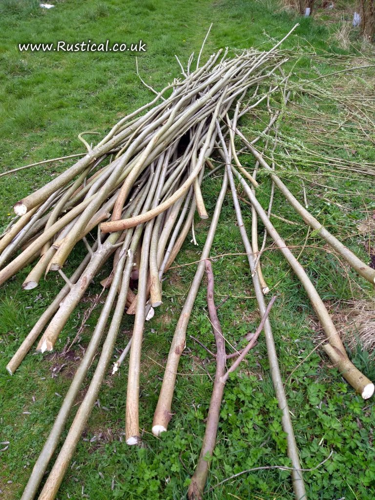 Lengths of hand cut Willow Short Rotation Coppice (SRC)
