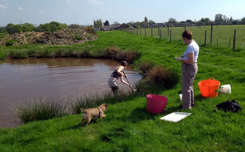 Farm ponds invertebrate audit