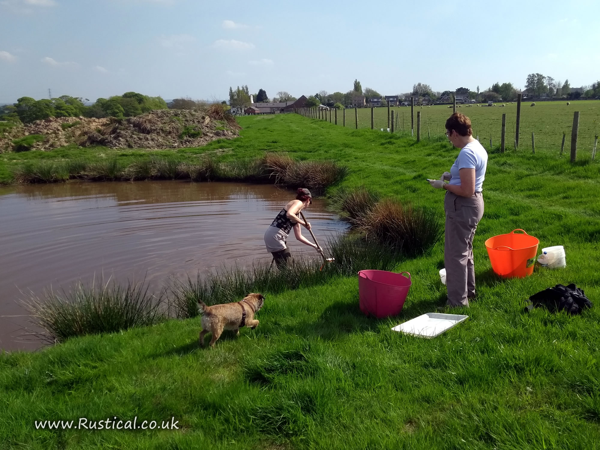 Counting freshwater invertebrates in a a freshly restored farm pond