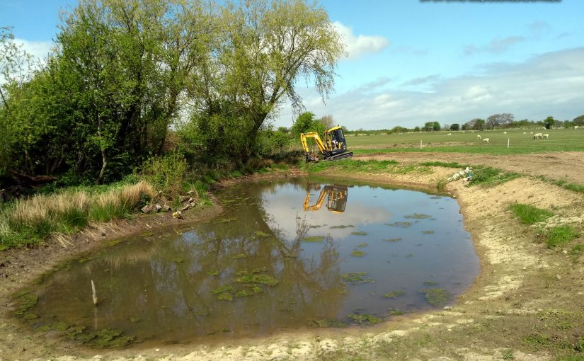 Raising the water levels in a restored farm pond