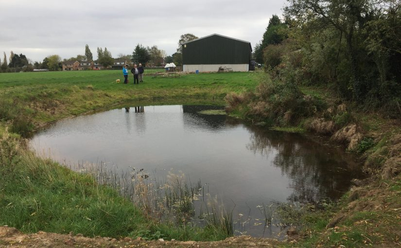 Autumn Pond Audit