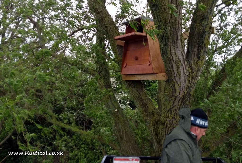 Barn owl nest box braced into tree