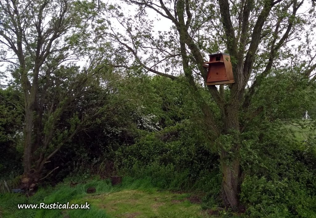 Installing a Barn Owl nest box