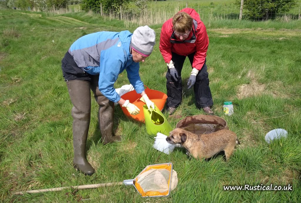 Freshwater pond invertebrate survey 6th May 2019