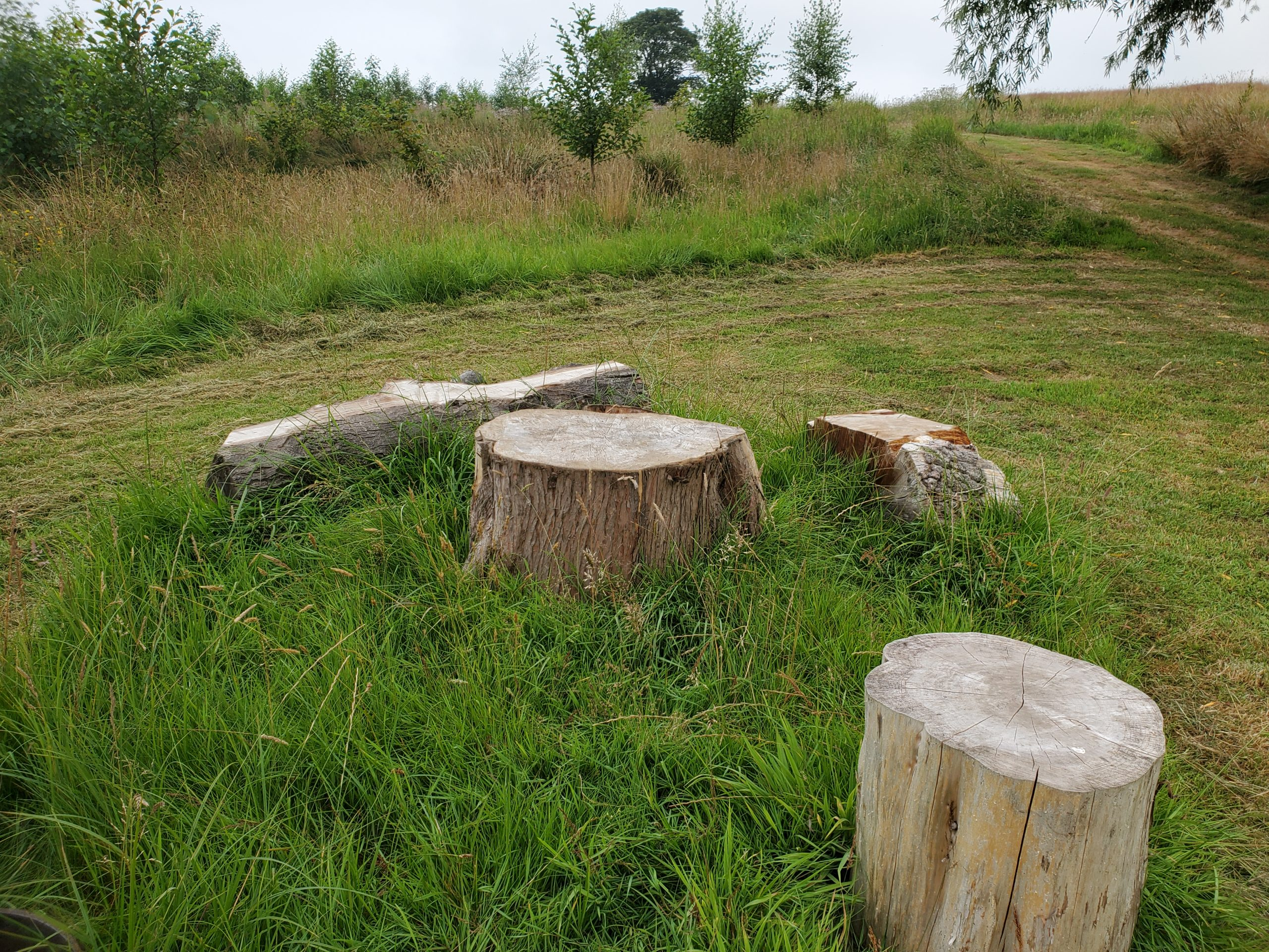 Log benches and table for picnics