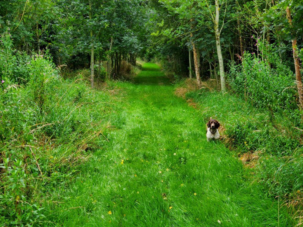 Woodland walks at Banks, Southport